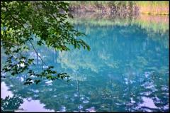 晩夏 五色沼の情景 三