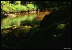 癒しの渓谷 七 ~ 美しき清流と癒しの苔 ~