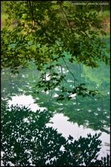 晩夏 五色沼の情景 二