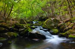 春の滝川 ~癒しを求めて~