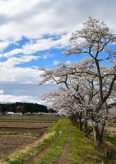 夏井の春 3