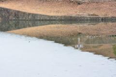 池の中の米粒