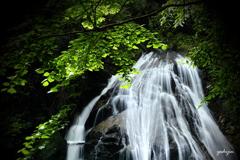新緑の奏 ~ 背戸の片鞍滝 ~
