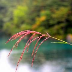 初秋彩 ~ 始まる秋 ~