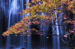変わりゆく秋彩の枝