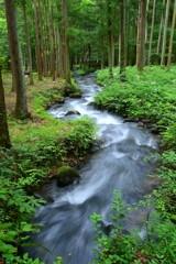 癒しの水林