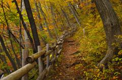 秋彩 癒しの遊歩道