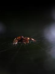 Spider in the darkness