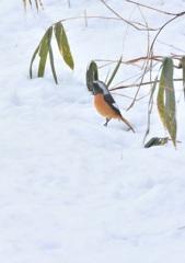 春雪の中で