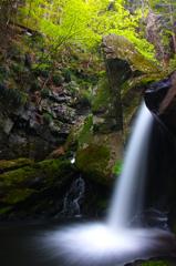 春の滝川 ~新緑おぼろ~