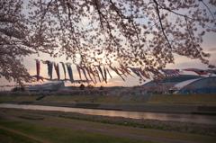 釈迦堂川の春 3