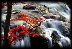山鶏滝 ~終秋~