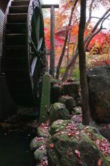 秋彩趣水車
