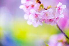 早めの春 II
