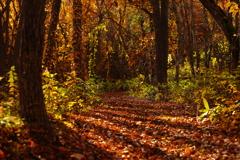 森林公園散歩 VI