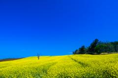 碧、そして青と黄