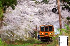 津軽の春 2018 V