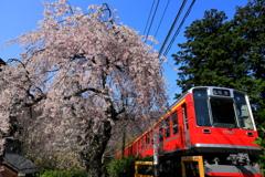 春の箱根 III