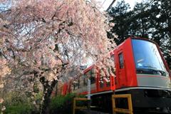 春の箱根 X