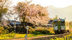輝く桜を・・・