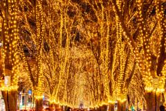 光溢れる街 II