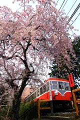 春の箱根 VIII