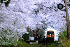 津鉄の春 2019 VI