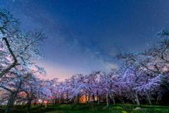 理想の夜桜