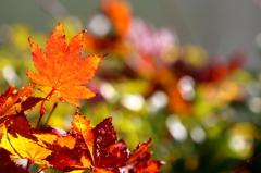 色づく季節 VI