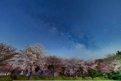 夜桜の終焉