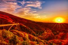 夕陽に煌めく紅葉
