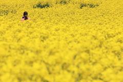 黄色い海 II