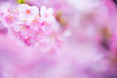 早めの春 I