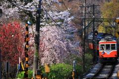 春の箱根 V