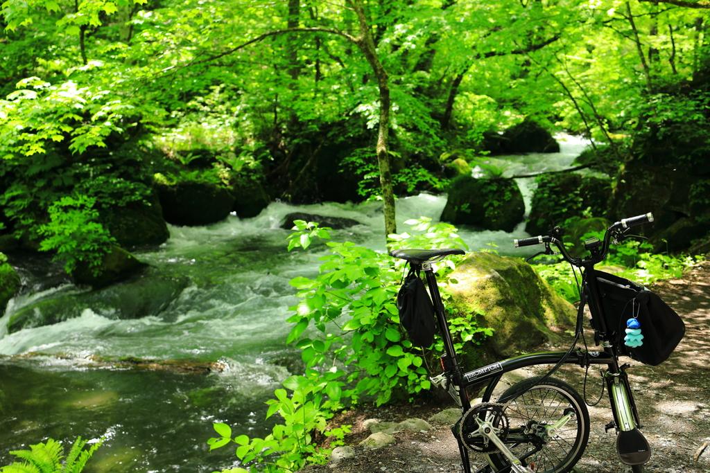 奥入瀬渓流散歩 III