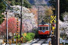 春の箱根 XII