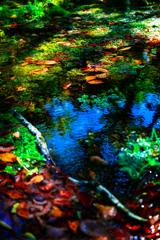 水源の落葉 II