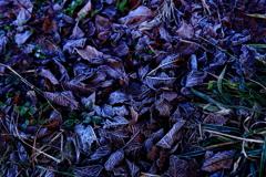 凍てつく夜明け -霜-