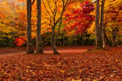 紅葉と赤絨毯