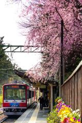 春の箱根 XI