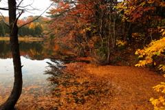 落ち葉の溜まり場