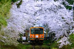 津鉄の春 2019 V