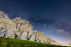 桜並木との競演 II