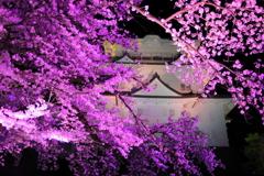 妖艶桜 II