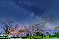 深夜の公園の桜