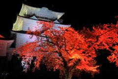 妖艶桜 I