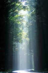 撮り鉄の合間 -光筋-