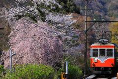 春の箱根 I