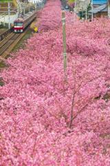 お花見列車 III