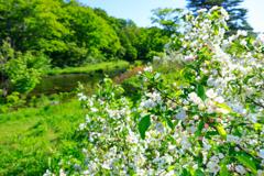 グダリ沼の春 II